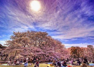 Những lễ hội độc đáo ở Nhật Bản có thể bạn chưa biết