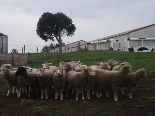 trang trại ở chiba