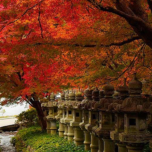 Tôi yêu Osaka mùa lá rụng