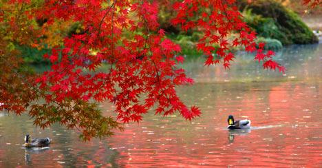 Từ vựng tiếng Nhật của riêng mùa thu