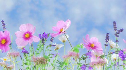 Tên tiếng Nhật của các loài hoa