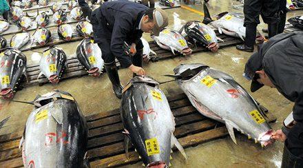 Cùng tìm hiểu nền ngư nghiệp Nhật Bản