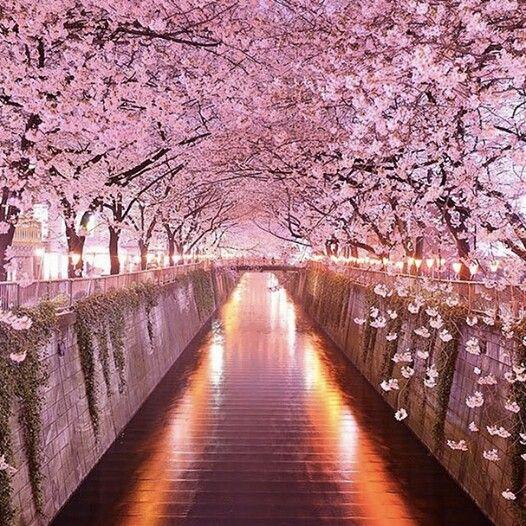 6 lý do để theo đuổi ước mơ du học Nhật Bản