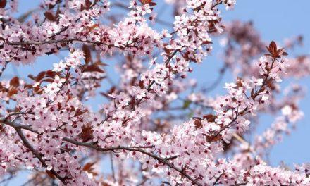 """""""Há hốc"""" với 10 lời khuyên cho người lần đầu đến Nhật Bản."""