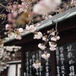 4 lợi thế của việc học tiếng Nhật