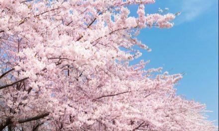 Akira và JASSO Việt Nam giải đáp thắc mắc du học Nhật Bản trên VTV4